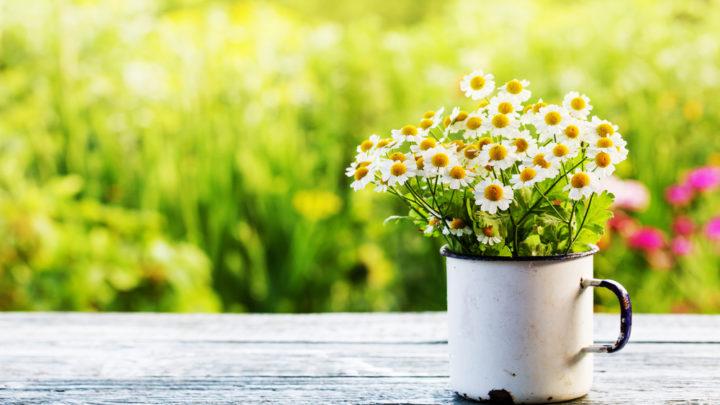 Winter ade — Frühling juchhe!